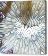 Anenomes 18 Canvas Print