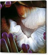 Anenomes 2 Canvas Print