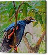 Angel Bird Of  North Moluccas Canvas Print