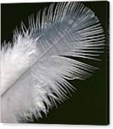 Angel Feather Canvas Print