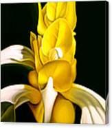 Angel Flower Canvas Print