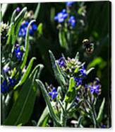 Angel Island Bee Canvas Print