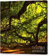Angel Oak Limbs Crop 40 Canvas Print
