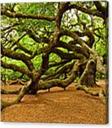 Angel Oak Tree Branches Canvas Print