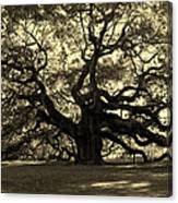 Angel Oak Tree Sepia Canvas Print