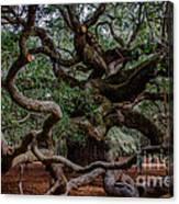 Angel Oak Tree Treasure Canvas Print