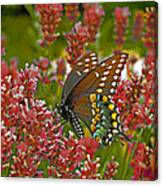 Angel Of The Wildflowers Canvas Print