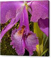 Angel Orchid Gold Leaf Canvas Print