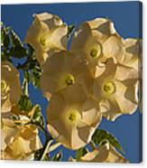 Angel Trumpets In The Sky Canvas Print