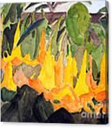 Angel Trumpets Canvas Print