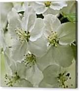 Angelic Blossom Canvas Print
