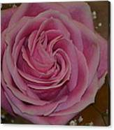 Angel's Pink Rose Canvas Print