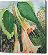 Angel's Trumpet Exotica Canvas Print