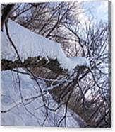 Angled Fallen Tree Canvas Print