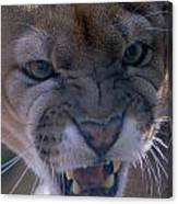 Angry Florida Panther Canvas Print