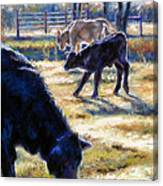 Angus Calves Out With Dad Canvas Print