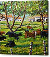 Angus Cows Under The Cool Shade By Prankearts Canvas Print
