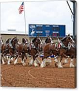 Anheuser Busch Clydesdales Pulling A Beer Wagon Usa Rodeo Canvas Print