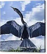 Anhinga Take Off Canvas Print