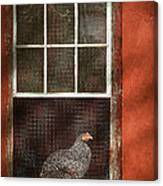 Animal - Bird - Chicken In A Window Canvas Print