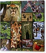 Animal Collage Canvas Print