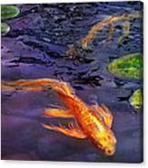 Animal - Fish - There's Something About Koi  Canvas Print
