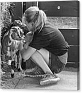 Animal - Goat - A Girl And Her Goat Canvas Print