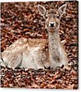 Animal Canvas Print