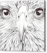 Animal Kingdom Series - Bird Of Prey Canvas Print