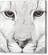 Animal Kingdom Series - Mountain Lion Canvas Print