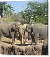 Animal Park - Busch Gardens Tampa - 01131 Canvas Print