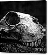 Animal Skull Canvas Print