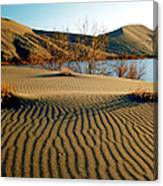 Animal Tracks In The Sand Canvas Print