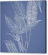 Anisogonium Lineolatum Canvas Print