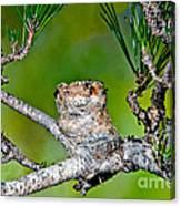Annas Hummingbird Nest Canvas Print