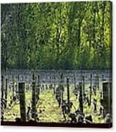 Anne Amie Vineyard 23126 Canvas Print