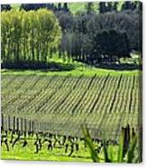Anne Amie Vineyard Lines 23093 Canvas Print