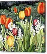 Ann's Tulips Canvas Print