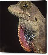 Anolis Lizard Portrait Peru Canvas Print