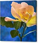 Another Beautiful Rose Canvas Print