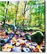 Another Enchanted Forest Canvas Print