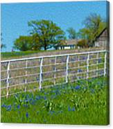Another Spring Old And New Canvas Print