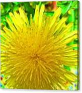 Another Variety Dandelion Canvas Print