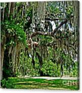 Savannah National Wildlife Refuge Canvas Print