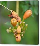 Ant On Plant Canvas Print