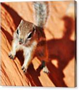 Antelope Ground Squirrel Canvas Print