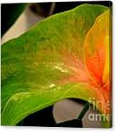 Anthurium In Red And Green Canvas Print
