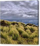 Anticipating The Approaching Rain Canvas Print