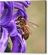 Anticipating The Nectar Canvas Print