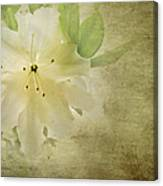 Antique Azalea Canvas Print